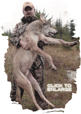 Wolf Hunting in Northwestern Ontario