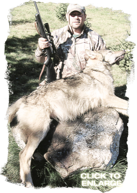 Wolf hunting in Ontario